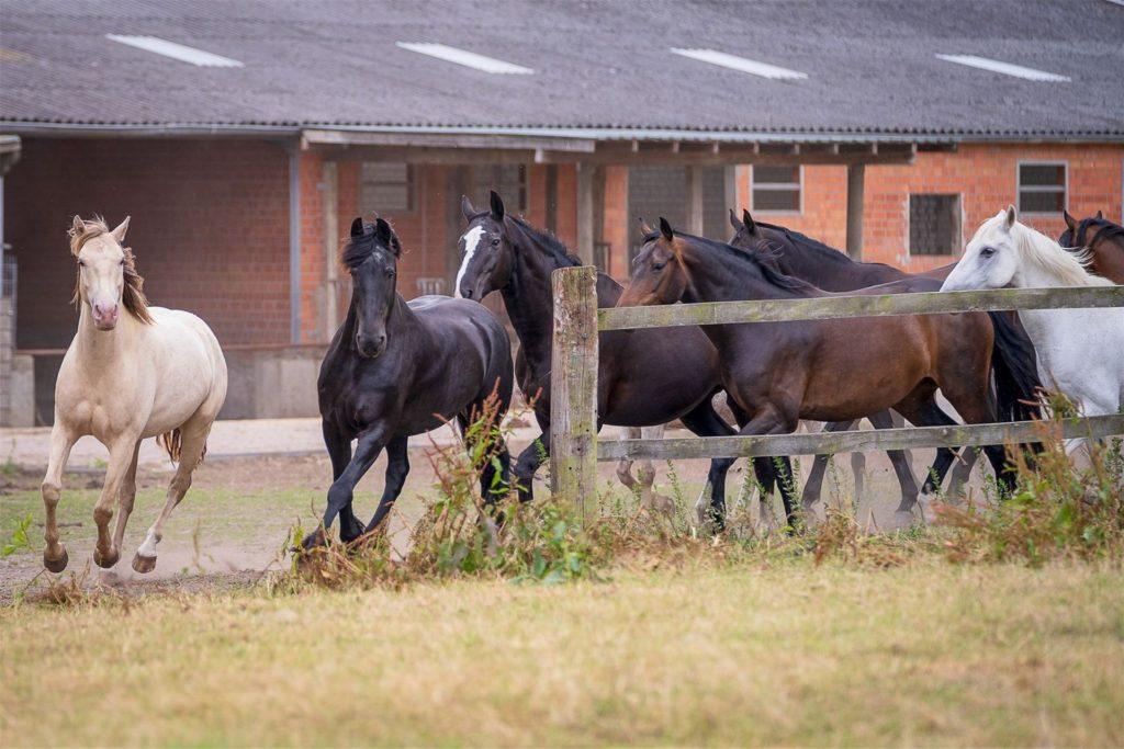 Pferdehalter und Stallbesitzer sind ebenfalls in großer Sorge.