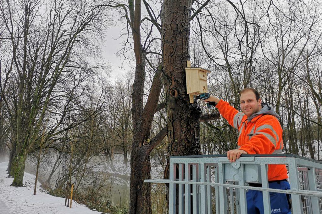 Rund 60 neue Nisthilfen für verschiedene Vogelarten befestigten die Mitarbeiterinnen und Mitarbeiter des Lippeverbandes aktuell in den Kreisen Wesel und Recklinghausen. Hier Andreas Heitkamp bei der Montage.