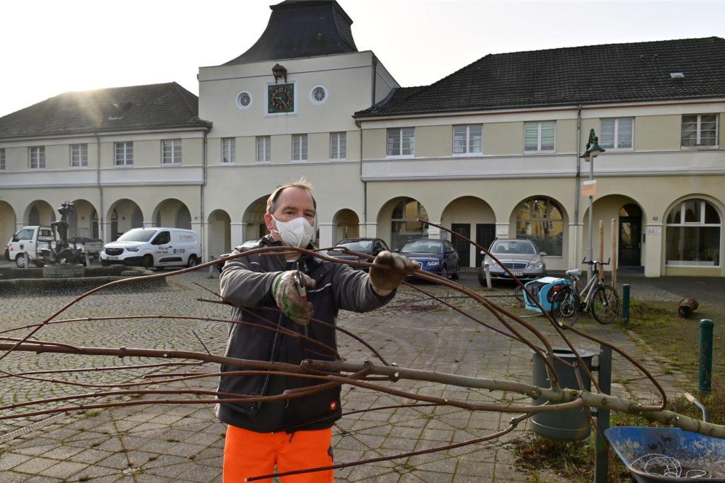 Vorarbeiter Michael Loick bereitet den Baum vor. Dafür werden einige Äste gestutzt.