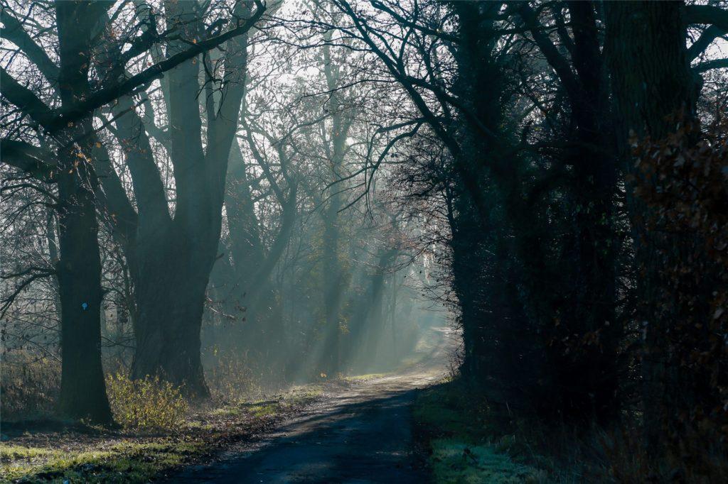 Natur pur bieten die Wälder rund um Groppenbruch im Dortmunder Nordwesten.