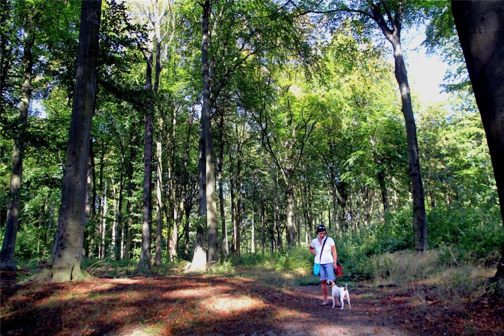 Das Grävingholz in Eving hat ein dichtes Wegenetz.