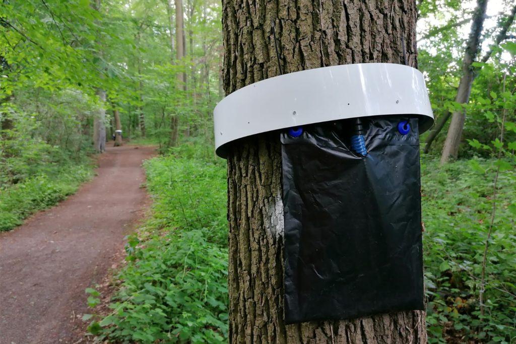 Diese Fallen für Eichenprozessionsspinner, angebracht im Stadtwald, haben sich nicht bewährt.