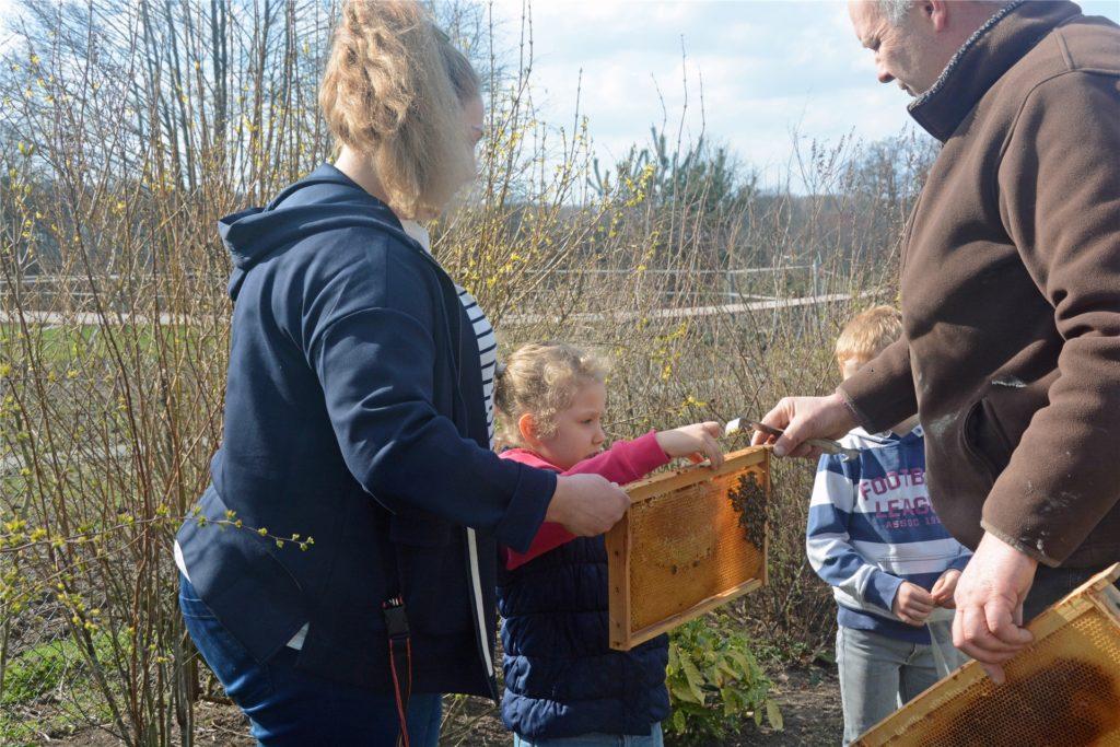 Antonius Schulze Beikel zieht die einzelnen Holzrähmchen aus dem Bienenstock heraus, um die Bienenkönigin zu finden.