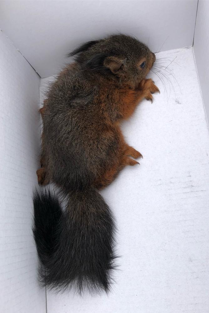 Das Tier wurde zu einer Auffangstation in Datteln gebracht.