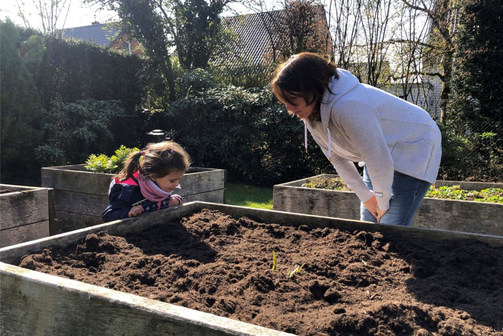 Die Frostnächte sind bald Vergangenheit. Dann werden die Hochbeete der Großtagespflege Pusteblume wieder für den Anbau von Zucchini und Co. genutzt.
