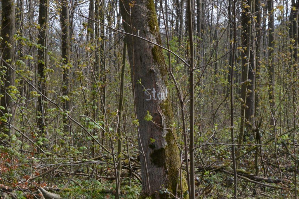 Der mit weißer Farbe markierte Startpunkt der Laufstrecke im Grävingholz befindet sich an einem Baum.