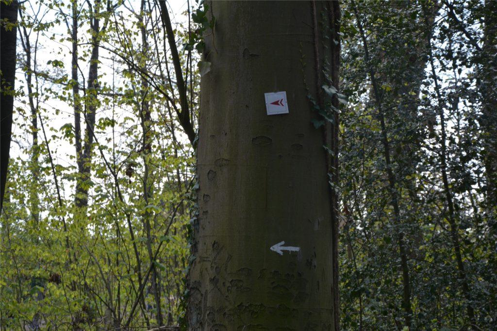 Roter Pfeil auf weißem Hintergrund: Die Schilder weisen den Weg auf der fünf Kilometer langen Strecke.