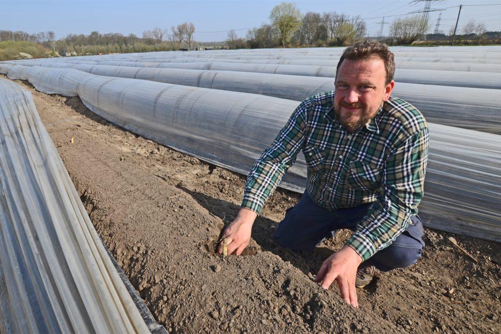 Bis Jan Menken auf dem neuen Feld den ersten Spargel ernten kann, vergehen zwei Jahre. Die Pflanzen müssen 2022 eine Saison komplett durchwachsen.
