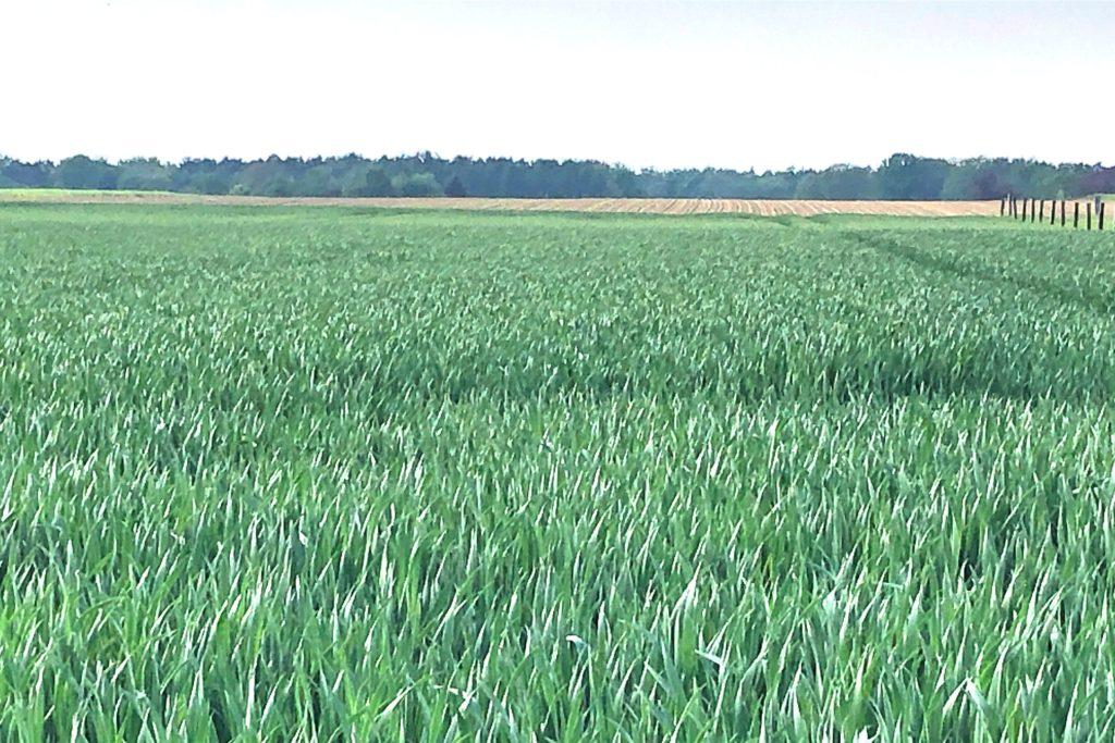 Die neuen Häuser grenzen an landwirtschaftlich bewirtschaftete Flächen, eine Ortsrandbegrünung soll künftig die unterschiedlichen Nutzungen voneinander trennen.