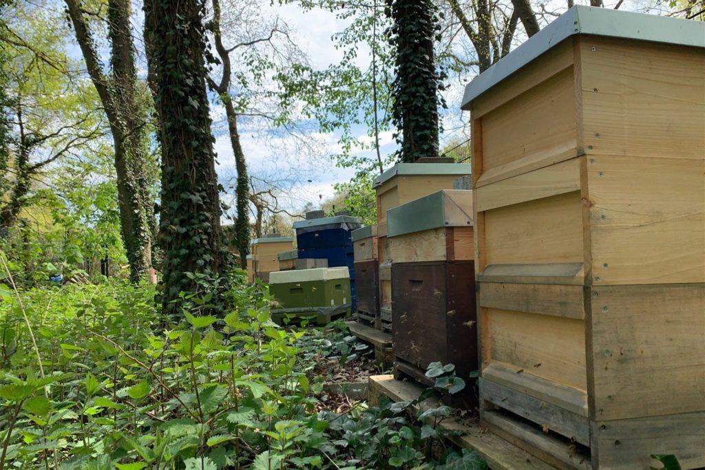 So sahen die Bienenstände in der Feldmark vor dem Einbruch aus.