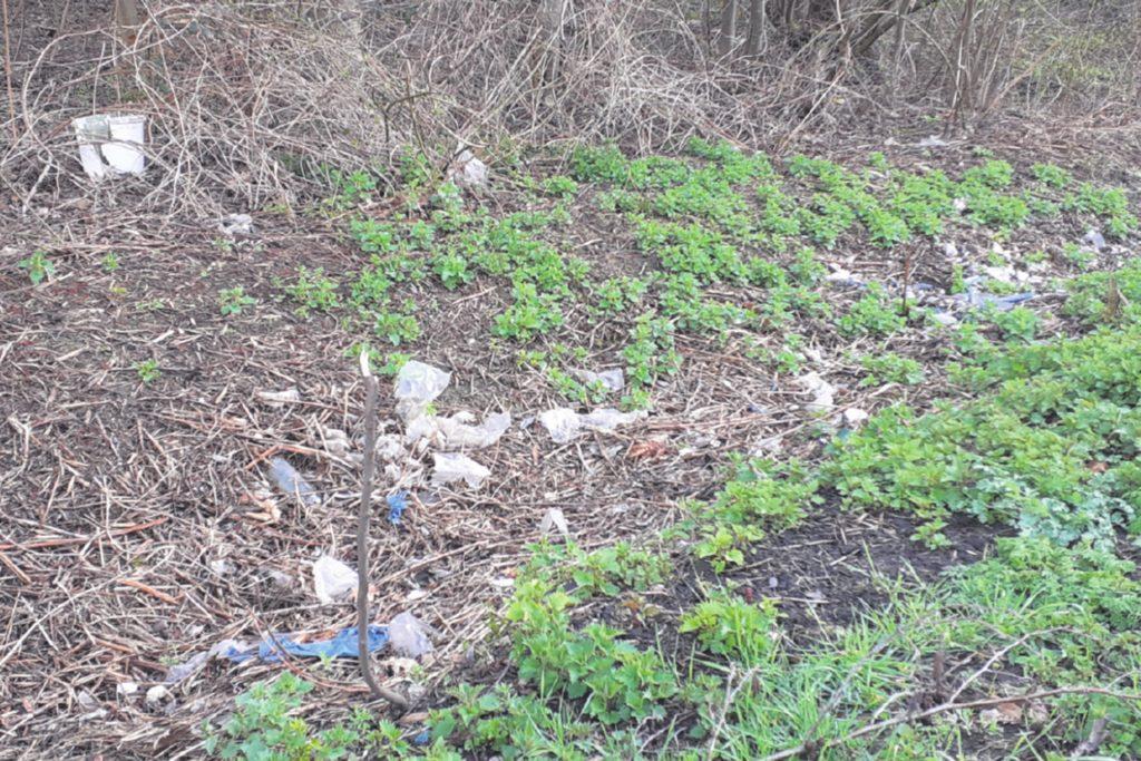 So sah es am Straßenrand der Ellinghauser Straße aus, das das Unterholz noch niederig war. Der Müll lag dicht an dicht.