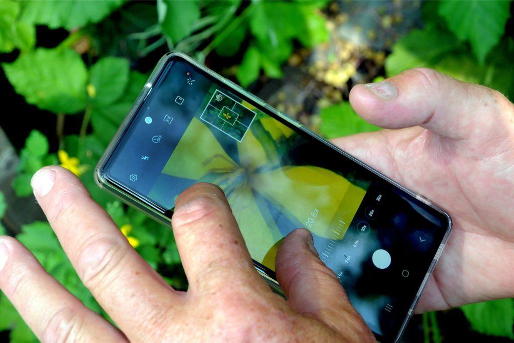 """Die meisten Kräuter wie dieses Schöllkraut kennt Ferdinand Ziese. Ansonsten hilft die Handy-App """"Flora Incognita"""
