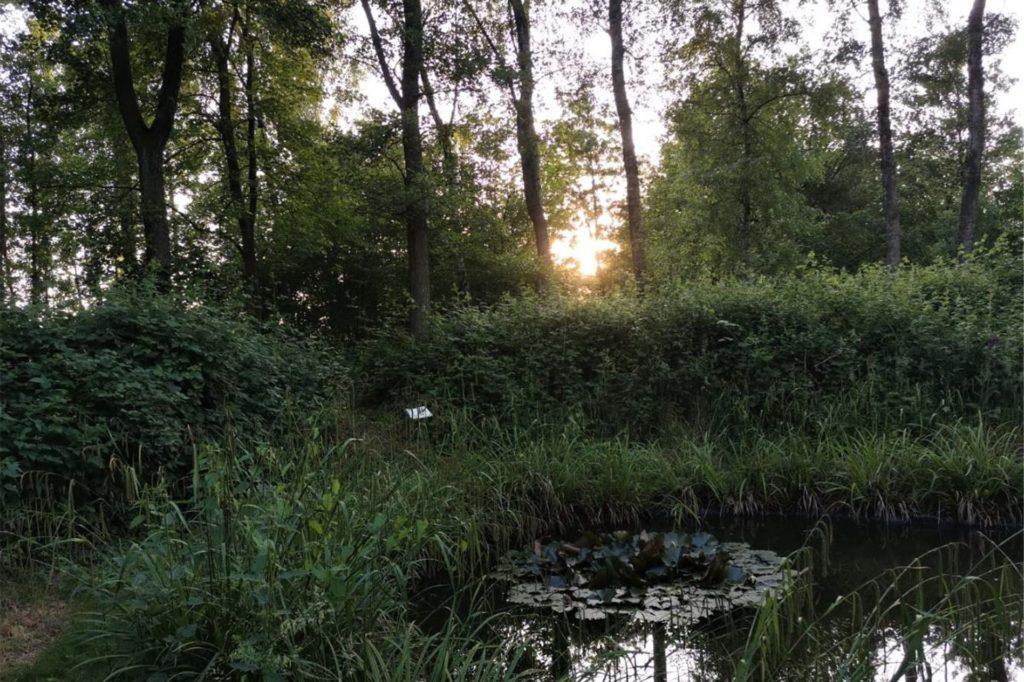 Sonnenuntergang am kleinen Weiher – ein Lieblingsplatz von Johannes Fockenberg.