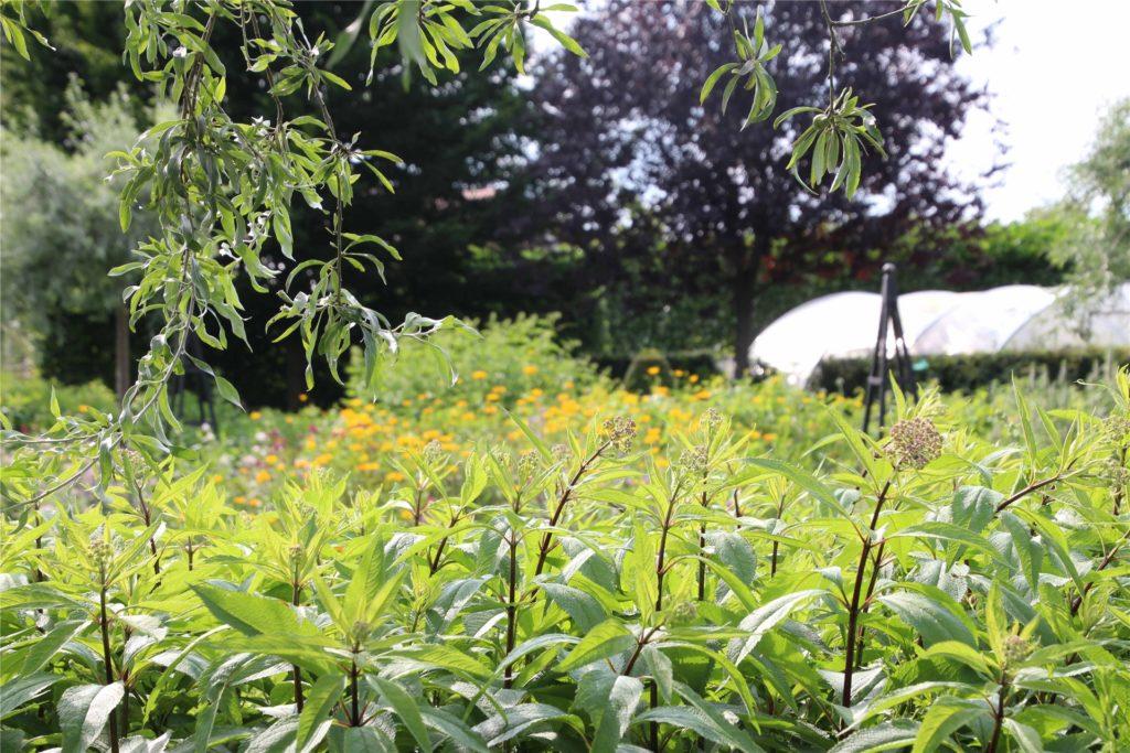In dem Garten von Familie Schwietering wachsen vor allem Stauden.