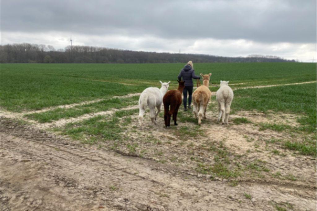 Im Mühlbachtal sind die Alpakas mit ihrer Besitzerin unterwegs.