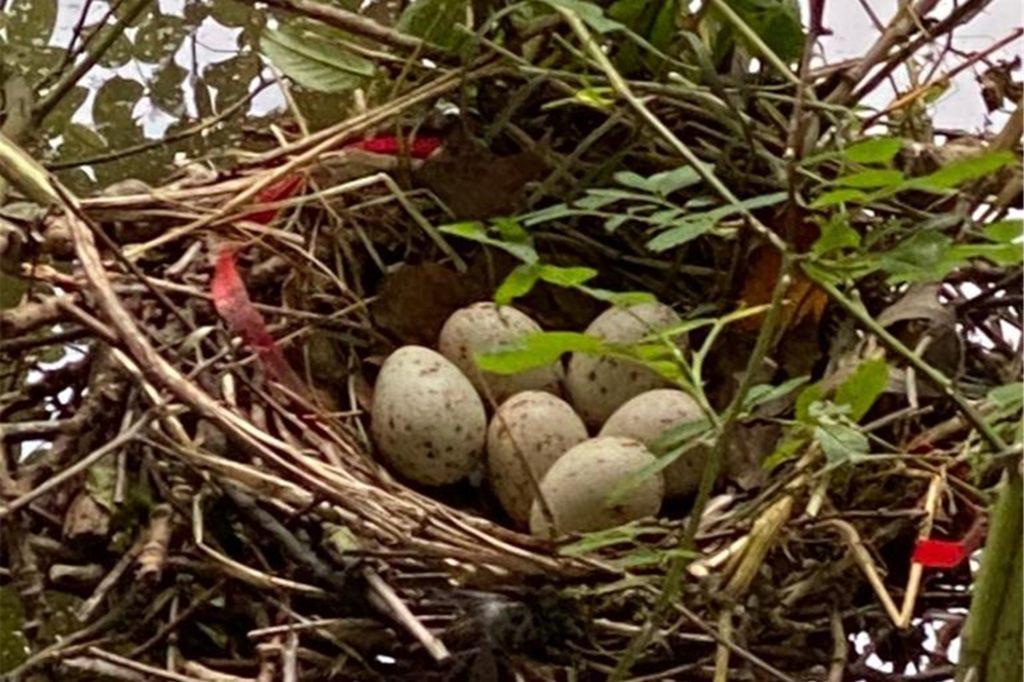 Ein Vogel hat in sein Nest Plastikteile eingebaut.