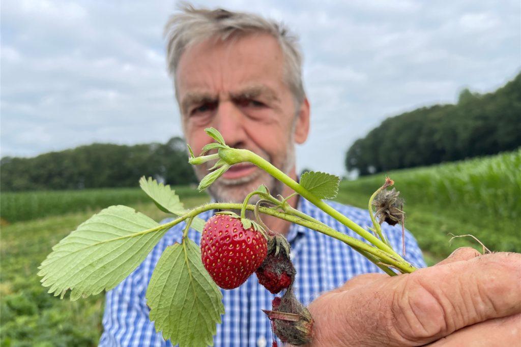 Ist zufrieden mit der Ernte und startet jetzt die Nachlese: Erdbeer-Anbauer Heinrich Möllers aus Stadtlohn.