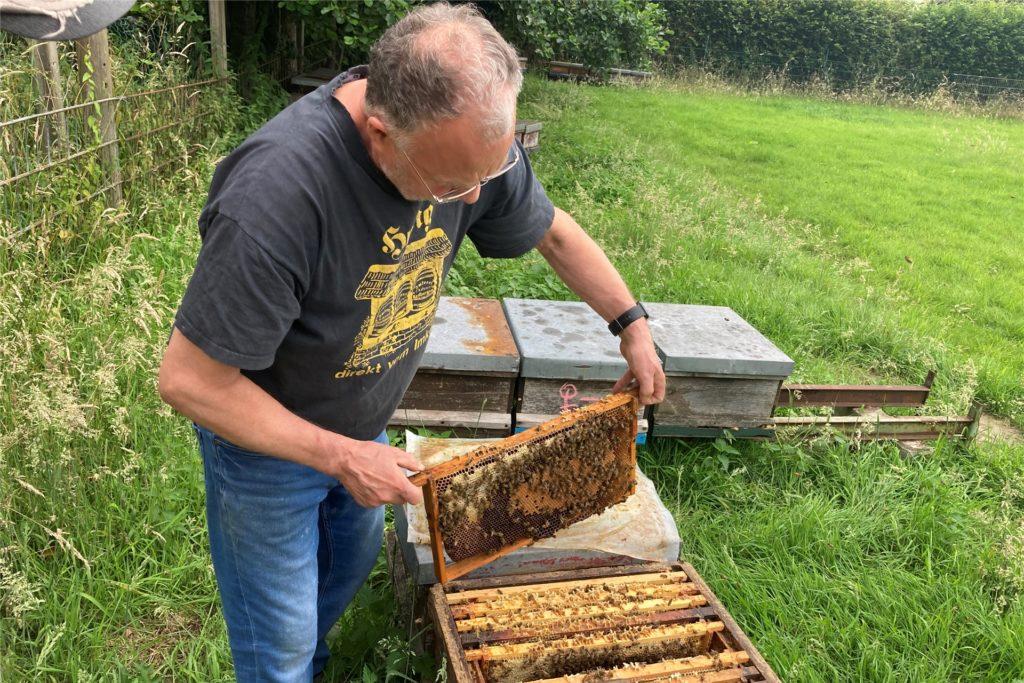 Ralf Schmidt schaut regelmäßig nach seinen Bienen - einmal die Woche werden sie mit Zucker gefüttert.