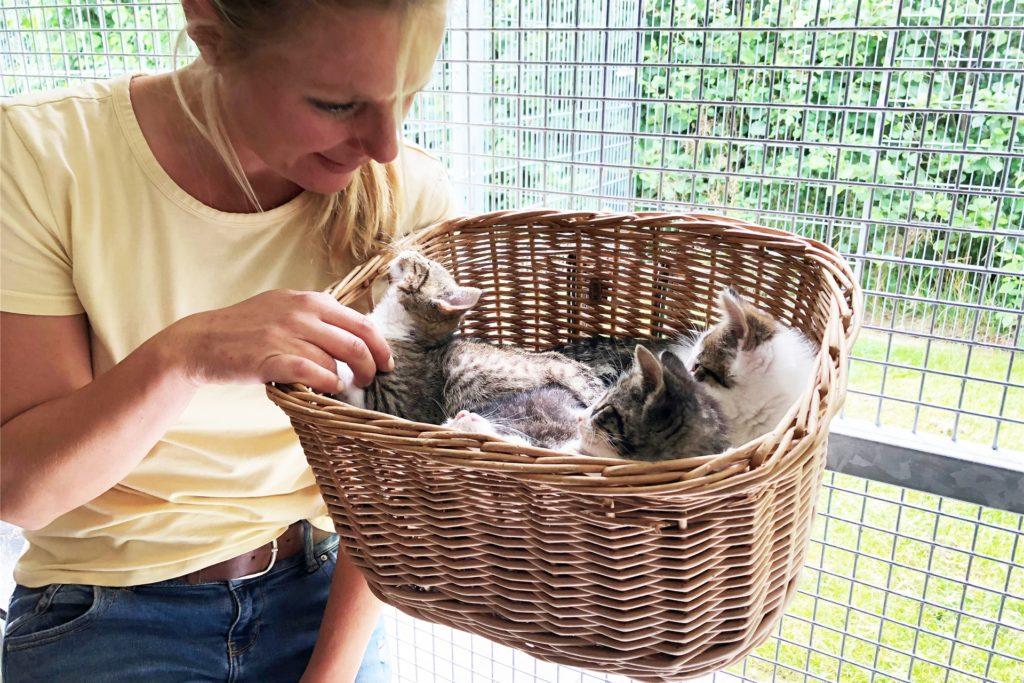 Julia Rehermann schmust mit einem Wurf kleiner Katzenkinder, der im Tierheim gelandet ist.