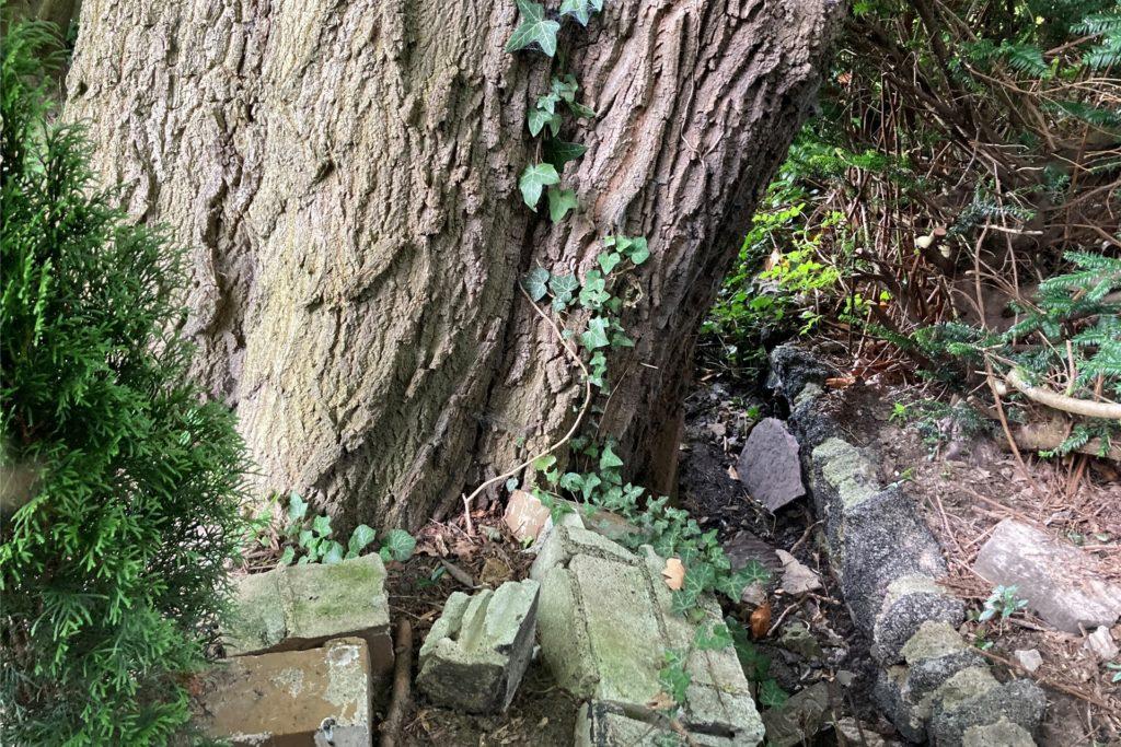 Die Esche steht am Rande eines Grabens. Während des Unwetters lief er über. Reste einer eingestürzten Mauer zeugen von der Wucht des Wassers.