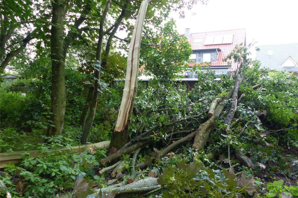 Der Blitz spaltete den Baum in der Mitte.