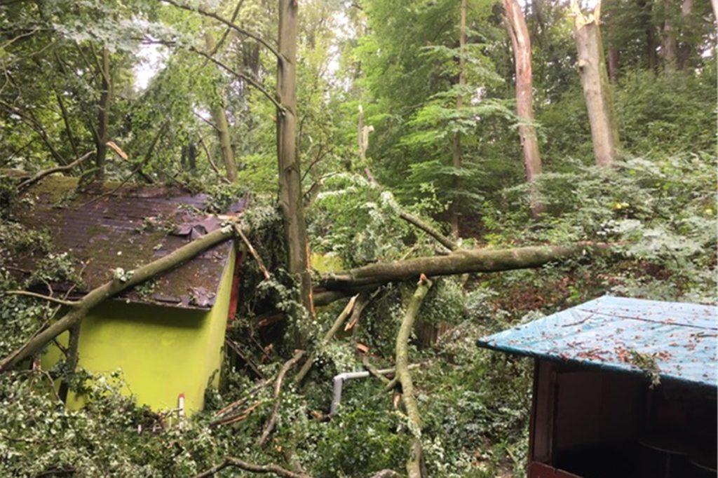 Ein umgestürzter Baum richtete schwere Verwüstung an und hat ein teures Nachspiel.