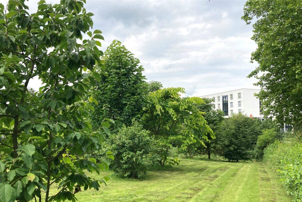 Zwischen Dünenlandschaft und der Straße am Rombergpark liegt die Fläche, die für den neuen Parkplatz angedacht ist.