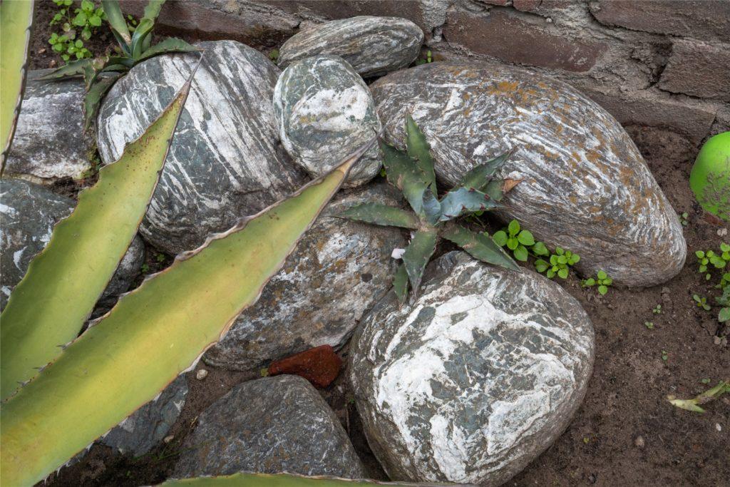Aus einem so kleinen Pflänzchen hat sich die Agave über die vergangenen elf Jahre entwickelt. Dass sie überhaupt blüht, obwohl sie das ganze Jahr über draußen steht, ist schon etwas Besonderes.
