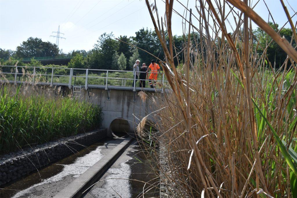 In der Regenwasserbehandlungsanlage Schwerte-Ergste wächst das Schilf meterhoch. Nach Anweisung soll es nicht gemäht werden.
