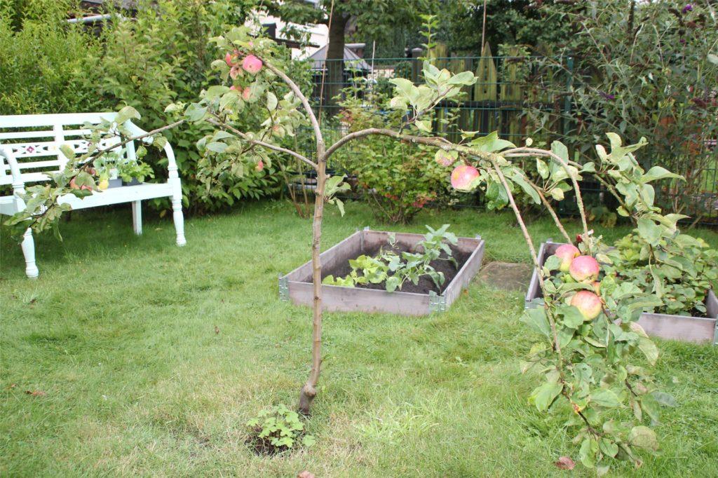 Auch frische Äpfel werden im Garten von Andrea und Karl Budde angebaut. Auf 350 Quadratmetern gibt es eine Mischung von Natur- und Nutzgarten.
