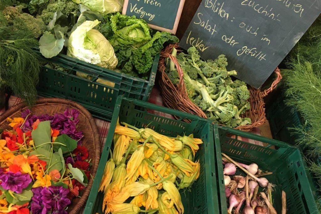 Selbst gezogenes Gemüse wird geerntet und dann an die Ernteteiler verteilt.